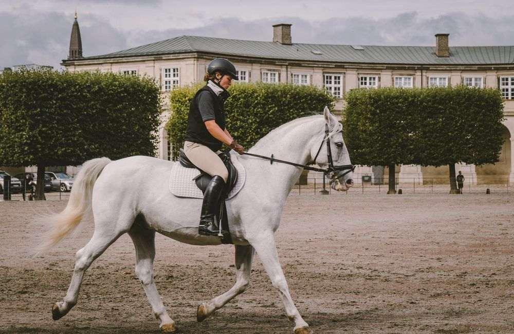 Etiquette in de paardensport